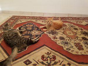 החתולים שהפכו להיות חברים חדשים במשפחה